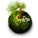 Kokedama (moss ball)